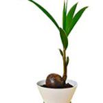 平野紫耀の観葉植物の種類はなに?トイレのガチャ・シャクレルアニマルについて