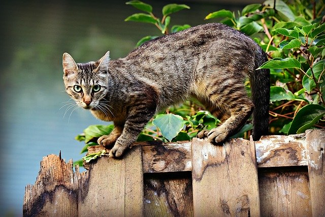 猫や犬が新型コロナウィルスに感染した際の症状は?ペットのコロナウィルスと人間のは違う?