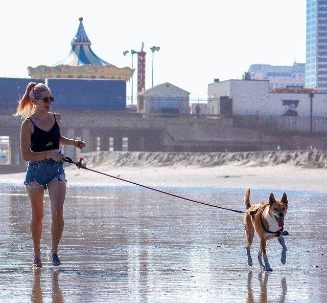 コロナウィルスはペットや犬に感染するの?香港で感染した犬は?散歩していいの?